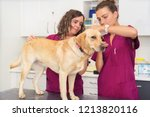 hearing checkup of a dog in... | Shutterstock . vector #1213820116