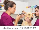 hearing checkup of a dog in... | Shutterstock . vector #1213820119