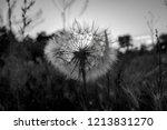 one fluffy white dandelion in a ... | Shutterstock . vector #1213831270