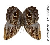 Illusion Of Owl Butterfly With...