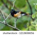 closeup of a beautiful male... | Shutterstock . vector #1213838056