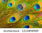 peacock feathers texture.... | Shutterstock . vector #1213898989