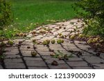 Many Chestnut Seed Pods On The...
