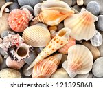 Sea Shells With Stone As...
