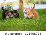 Stock photo four little kittens playing in garden together 121406716