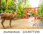 Small photo of Wild deer and Torii gate of Nara Park in Japan. Deer are Nara's greatest tourist attraction. red Torii gate of Kasuga Taisha Shine one of the most popular temples in Nara City.