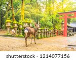 wild deer in nara park in japan.... | Shutterstock . vector #1214077156