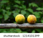 Tangerine Withered On Bamboo