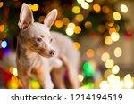 dog toy terrier is a light... | Shutterstock . vector #1214194519