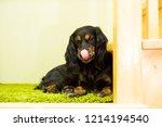 spaniel dog of black color lies ... | Shutterstock . vector #1214194540