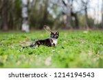 little kitten tortoiseshell... | Shutterstock . vector #1214194543