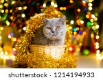 large gray cat without breed... | Shutterstock . vector #1214194933