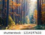 clean environment. autumn.... | Shutterstock . vector #1214197633