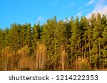 forest on a clear autumn day. | Shutterstock . vector #1214222353