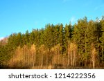 forest on a clear autumn day. | Shutterstock . vector #1214222356