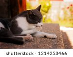 cat liking after great meal | Shutterstock . vector #1214253466