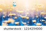 yellow forest flowers and blue... | Shutterstock . vector #1214254000