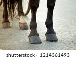 horse feet with hoofs and... | Shutterstock . vector #1214361493