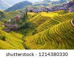 The Longsheng Rice Terraces(Dragon