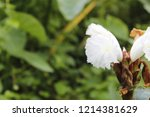 beautiful cone shaped white... | Shutterstock . vector #1214381629