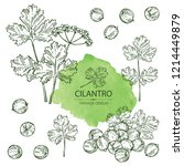 collection of coriander and... | Shutterstock .eps vector #1214449879