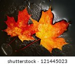 Two Maple Leaves Frozen In The...