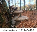 mushrooms can be eaten raw  can ... | Shutterstock . vector #1214464426