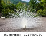peacock in the garden  stresa ... | Shutterstock . vector #1214464780