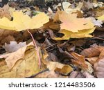 fall color change | Shutterstock . vector #1214483506