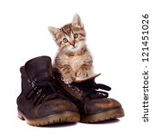 Kitten And Boots On A White...
