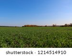 winter grain crops green field... | Shutterstock . vector #1214514910
