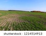 winter grain crops green field... | Shutterstock . vector #1214514913