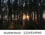 walkway through pine forest.... | Shutterstock . vector #1214514940