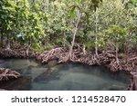 tha pom klong song nam  krabi ... | Shutterstock . vector #1214528470