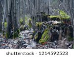 Small photo of old crummy stump in the gloomy autumn forest