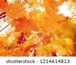 autumn forest landscape on a... | Shutterstock . vector #1214614813