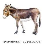 Donkey Colorful Isolated On...