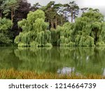 weeping willow trees    Shutterstock . vector #1214664739