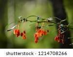 beautiful wild flowers from the ... | Shutterstock . vector #1214708266