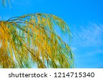 branches of weeping willow tree ...   Shutterstock . vector #1214715340