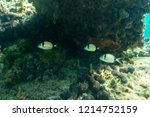 underwater photo from beautiful ...   Shutterstock . vector #1214752159