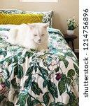 cute white cat fluffy ... | Shutterstock . vector #1214756896