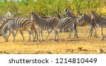 panorama of kruger national... | Shutterstock . vector #1214810449