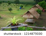 chlorophytum comosum  with... | Shutterstock . vector #1214875030