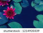 red lotus water lily blooming... | Shutterstock . vector #1214920339