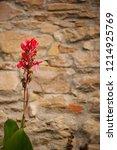 Photo Of Wildflower Castilleja...