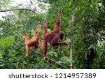 kuching  malaysia   october 12  ... | Shutterstock . vector #1214957389