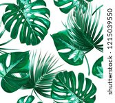 tropical palm leaves  monstera  ... | Shutterstock .eps vector #1215039550