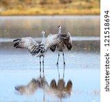 A Pair Of Sandhill Cranes...