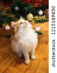 Stock photo red fluffy kitten in the christmas decorations kitten sitting on the background of christmas lights 1215189850